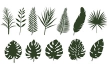 Monochrome Leaves Of Different Tropical Plants. Set Of Fern Leaves, Palm Tree. Leaves Of Different Shapes.
