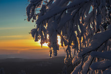 Sunset In The Winter Forest, T...