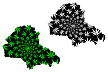 Brasov County (Administrative Divisions Of Romania, Centru Development Region) Map Is Designed Cannabis Leaf Green And Black, Brasov Map Made Of Marijuana (marihuana,THC) Foliage