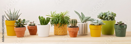 Collection of various succulents and plants in colored pots Fototapete