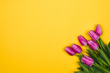 Fototapeta Tulips - Pink, purple tulips in corner on yellow background