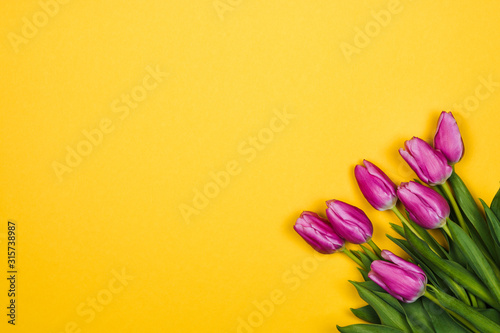 Pink, purple tulips in corner on yellow background #315738987