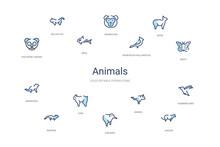 Animals Concept 14 Colorful Ou...