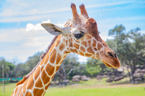 Photo Blurred giraffe background
