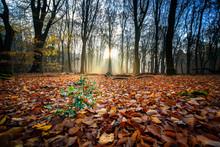 Forrest Trees Autumn Wildernes...