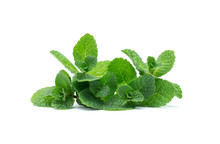 Fresh Green Mint Leaves Isolated On White Background. Top View.