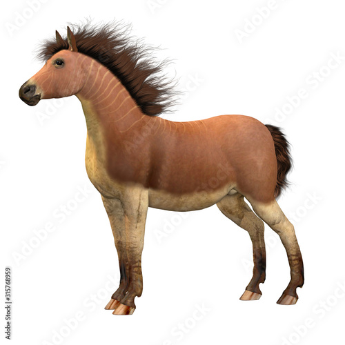 Fotografie, Obraz Equus Scotti Horse - This primitive horse lived in North America during the Pleistocene Period and became extinct