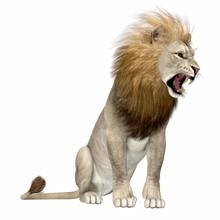 North America Lion - The Ameri...