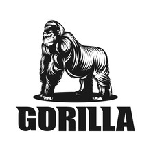 Angry, Animals, Ape, Big, Branding, Chimp, Club, Creative, Design, Giant, Gorilla, Graphic, Head, Icon, Illustrator, Kingkong, Logo, Mascot, Media, Monkey, Powerpoint, Primate, Pro, Silverback, Sport