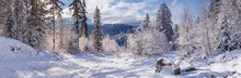 Winter Landscape, Panorama, Ba...