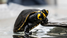 Closeup Of Turtle