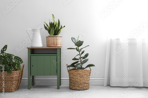 Obraz Different tropical plants in wicker pots near white wall at home - fototapety do salonu