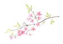 桜の水墨画 彩墨画