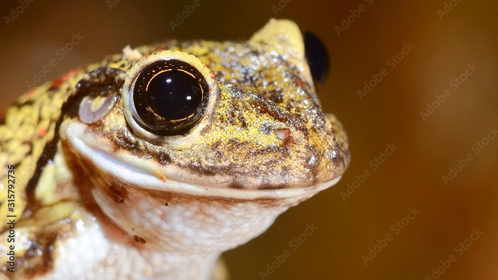 Fototapeta Colorful frog in terrarium