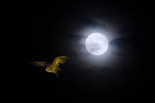 月明かりの夜空を舞う...