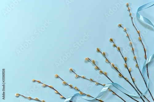Fototapety, obrazy:  Willow twigs are parallel to each other in the lower left corner, large with a ribbon on a blue background.