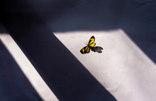 Artistic View Of Butterfly On ...