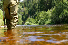 Fly Fisherman Wading In A Shal...