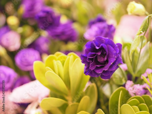 violet rose flower Beautiful bouquet on blurred of nature background symbol love Valentine Day