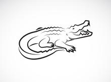 Vector Of Crocodile Design On ...