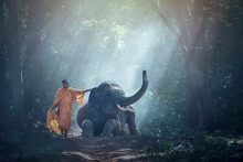 Monk And Elephant At Thailand ...