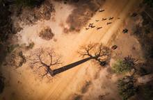 Baobab Madagascar Vue Aerienne