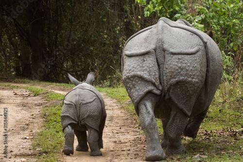 Photo Great Indian Rhinoceros and its calf in Kaziranga National Park