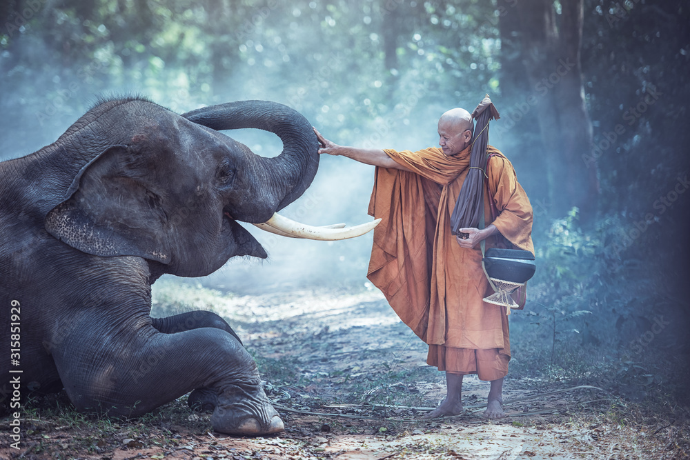 Fototapeta Thailand Buddhist monks with elephant is traditional of religion Buddhism on faith Thai people