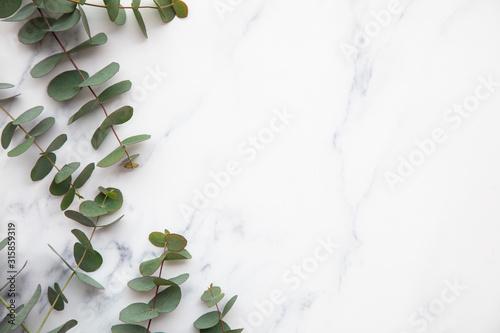 Fototapeta Border of eucalyptus leaves on a marble background. Lay flat obraz