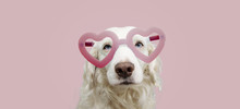 Portrait Lovely Dog In Pink He...