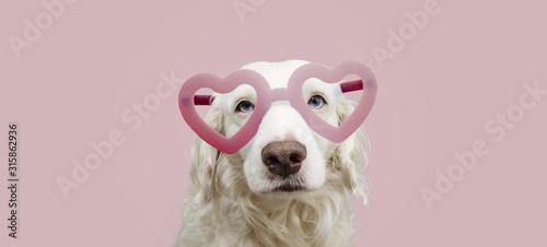 portret-piekny-pies-w-rozowym-ksztalcie-serca