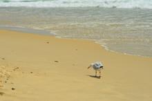 A Seagull Is Walking Along A B...