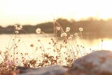 Blur Dry Flower Of Coat Button...