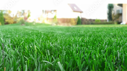 Obraz Spring season sunny lawn mowing in the garden. Lawn blur with soft light for background. - fototapety do salonu