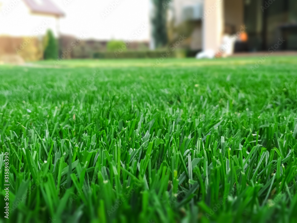Fototapeta Spring season sunny lawn mowing in the garden. Lawn blur with soft light for background.