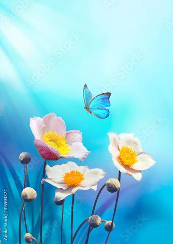 zawilce-piekne-rozowe-kwiaty
