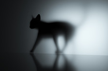3D Render Of A Cat Walking With Shadow Against A Wall