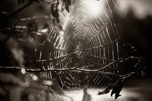 Large Spiderweb In The Sunlight