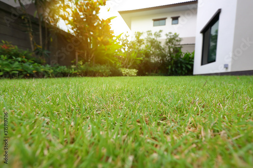 Obraz lawn landscaping with green grass turf in garden home - fototapety do salonu