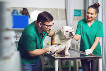 Veterinarian And Assistant In ...