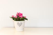 Pink Azalea Flower Blooming In...