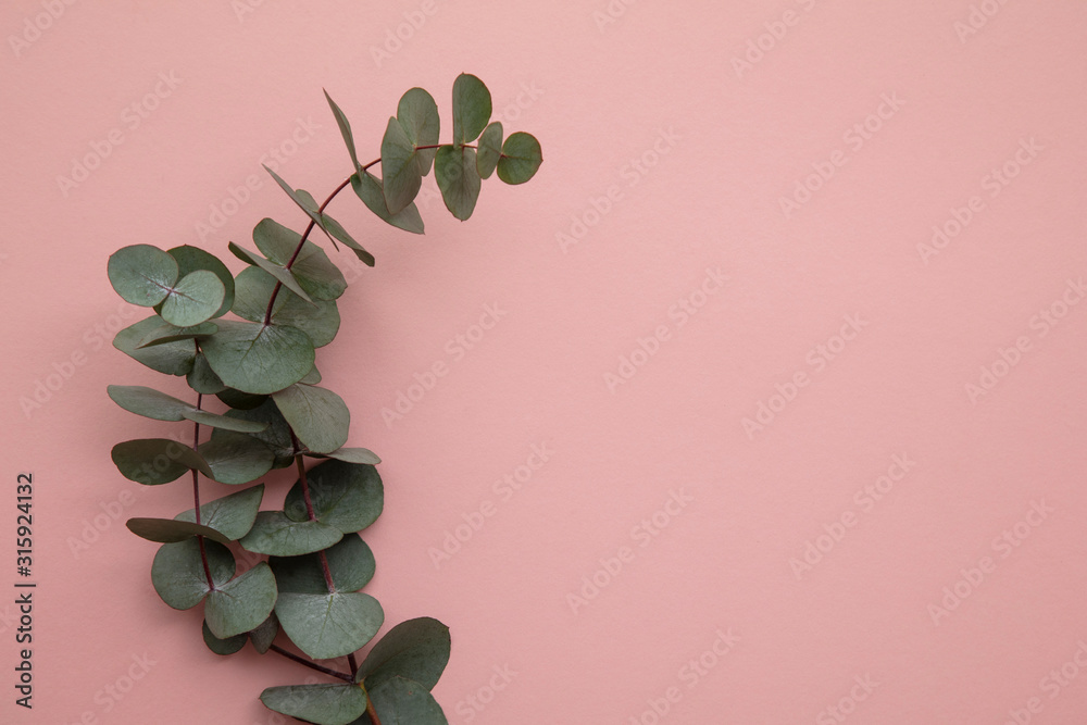 Fototapeta Branches of eucalyptus leaves on a marble background. Lay flat