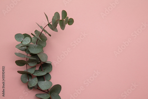 Obraz Branches of eucalyptus leaves on a marble background. Lay flat - fototapety do salonu