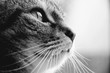 canvas print picture - Handsome cat. Profile, side view, black and white.