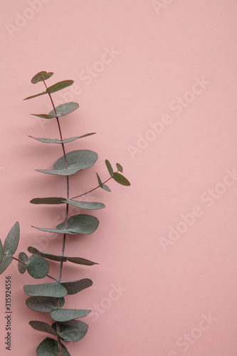 Branches of eucalyptus leaves on a marble background. Lay flat