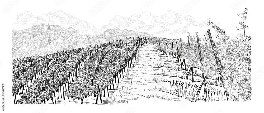 Fototapeta Hill of vineyard landscape with farm on horizont and clouds hand drawn sketch vector illustration isolated on white