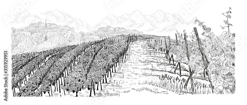 Fotografia Hill of vineyard landscape with farm on horizont and clouds hand drawn sketch ve