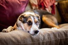 Dog Asleep On A Couch