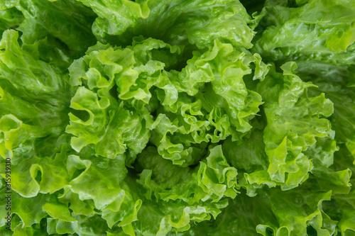 Close up bunch of fresh, green batavia lettuce salad Fototapete