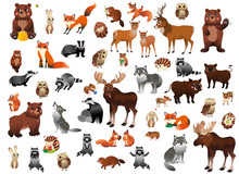 Big Cartoon Forest Animals Vec...
